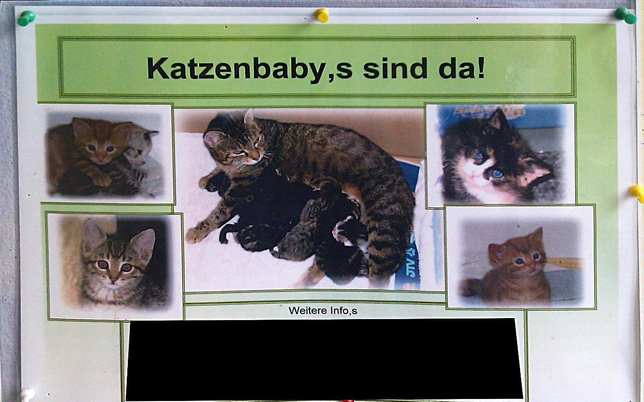 Katzenbaby,s sind da! Info,s hier!